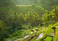 Photo by  @ermakova wa web - beautiful sunrise over the green rice terraces ubud bali indonesia t20 x6W4Az 120x86 - WA WEB – Cara Membuka WhatsApp Di Laptop Dan Komputer