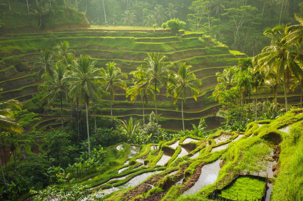 7 Hasil Pertanian Indonesia Kualitas Terbaik Dunia - beautiful sunrise over the green rice terraces ubud bali indonesia t20 x6W4Az - 7 Hasil Pertanian Indonesia Kualitas Terbaik Dunia