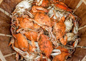 Cara Menjadi Eksportir Pemula yang Sukses - food food orange dinner meal seafood crab crustacean shellfish t20 GgeBVo 350x250 - Cara Menjadi Eksportir Pemula yang Sukses