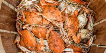 Cara Menjadi Eksportir Pemula yang Sukses - food food orange dinner meal seafood crab crustacean shellfish t20 GgeBVo 360x180 - Cara Menjadi Eksportir Pemula yang Sukses
