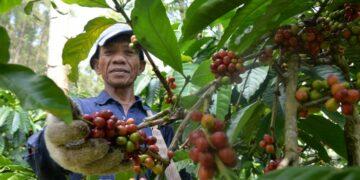 @GunawanAB via Twenty20 Cara Menjadi Eksportir Pemula yang Sukses - coffee farmers are picking red coffee red picked coffee will produce perfect coffee beans t20 noG7Ln 360x180 - Cara Menjadi Eksportir Pemula yang Sukses